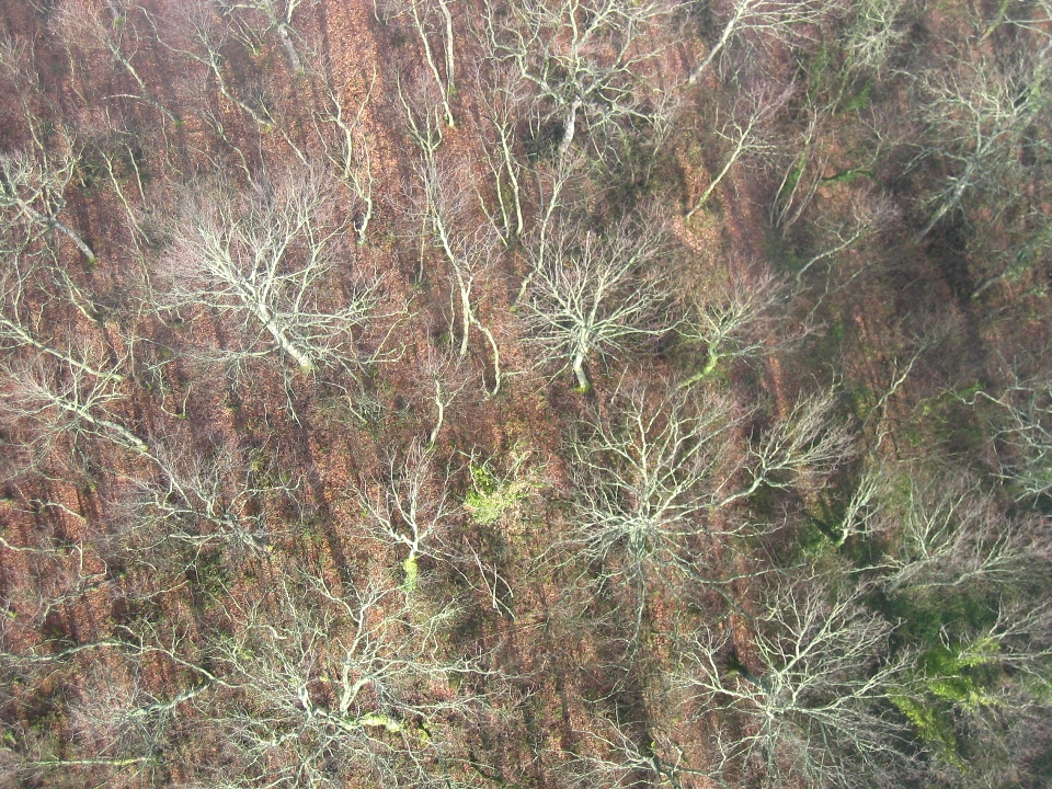 winter woods from the balloon