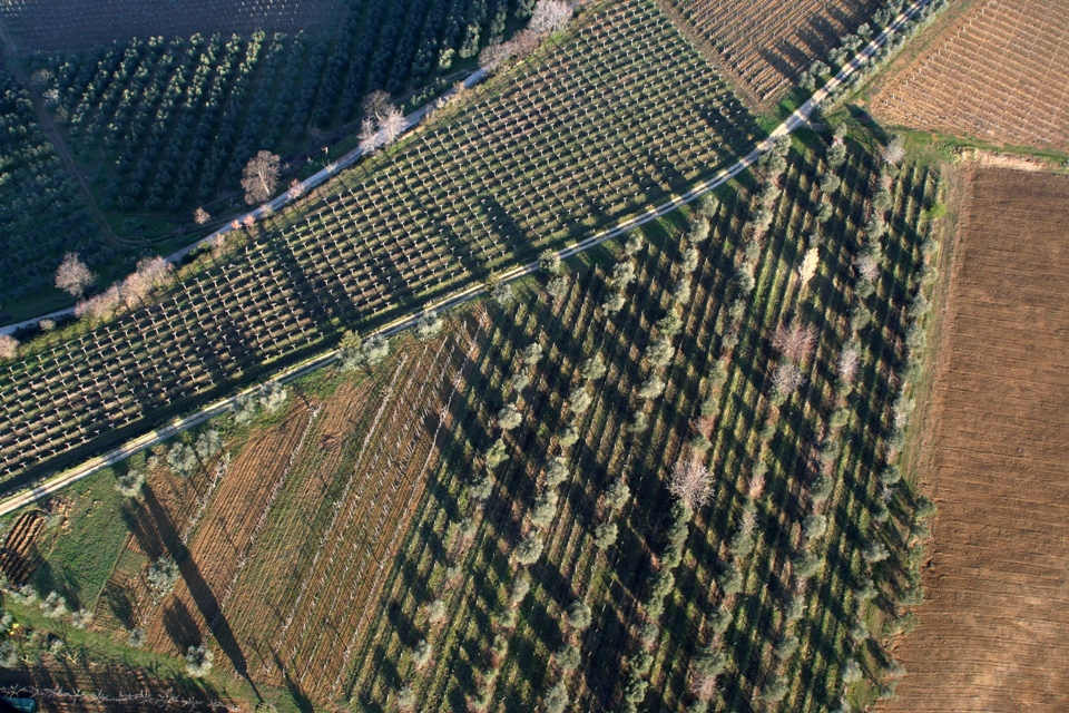 vineyards and olive trees